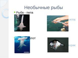 Необычные рыбы Рыба - пила Рыба – молот Рыба – игла Рыба – топорик