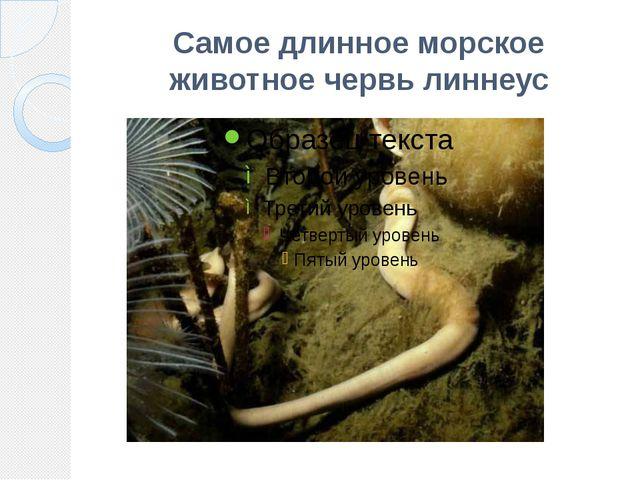Самое длинное морское животное червь линнеус