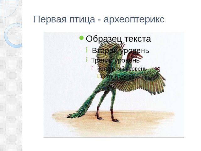 Первая птица - археоптерикс