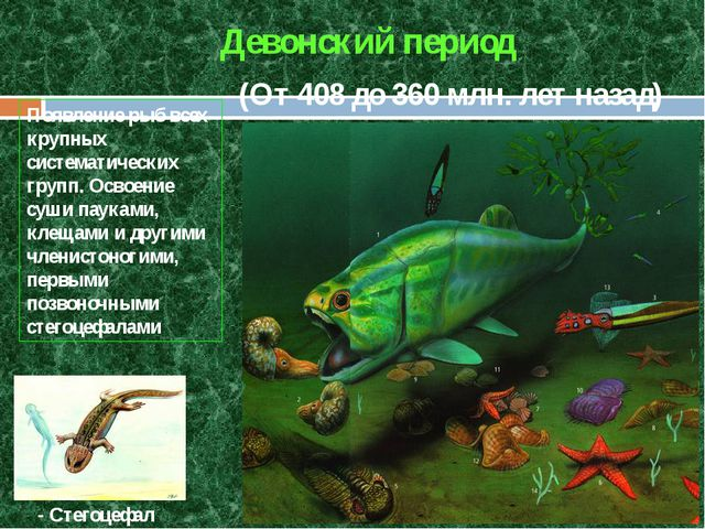 (От 408 до 360 млн. лет назад) Девонский период Появление рыб всех крупных си...