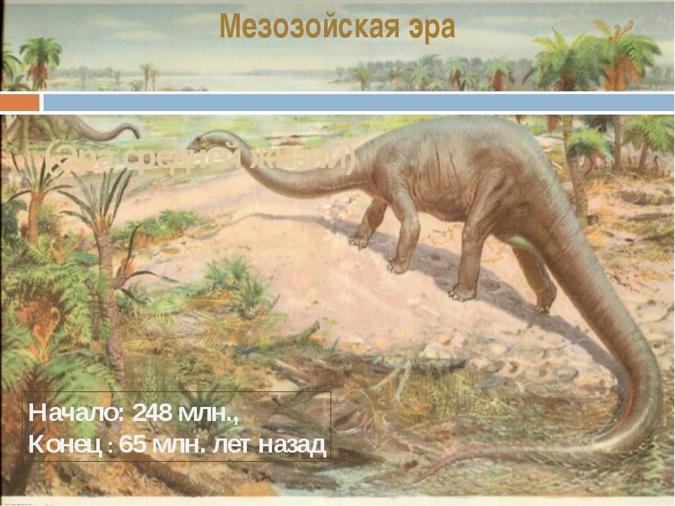 Мезозойская эра (Эра средней жизни) Начало: 248 млн., Конец : 65 млн. лет назад