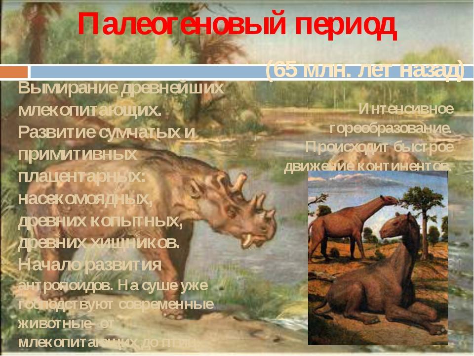 (65 млн. лет назад) Палеогеновый период Вымирание древнейших млекопитающих. Р...