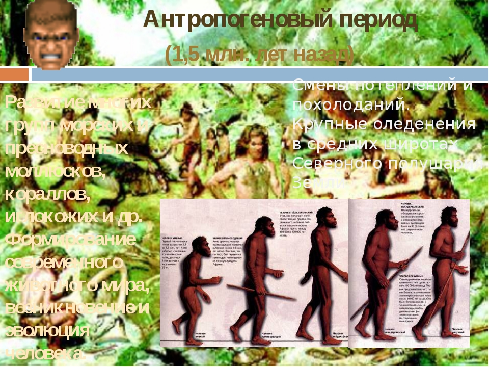 (1,5 млн. лет назад) Антропогеновый период Развитие многих групп морских и пр...