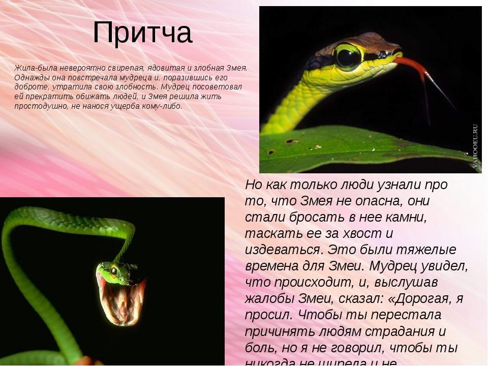 Притча Жила-была невероятно свирепая, ядовитая и злобная Змея. Однажды она по...