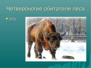 Четвероногие обитатели леса Зубр