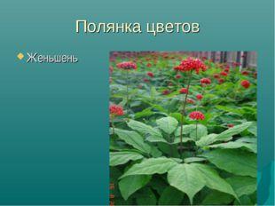 Полянка цветов Женьшень