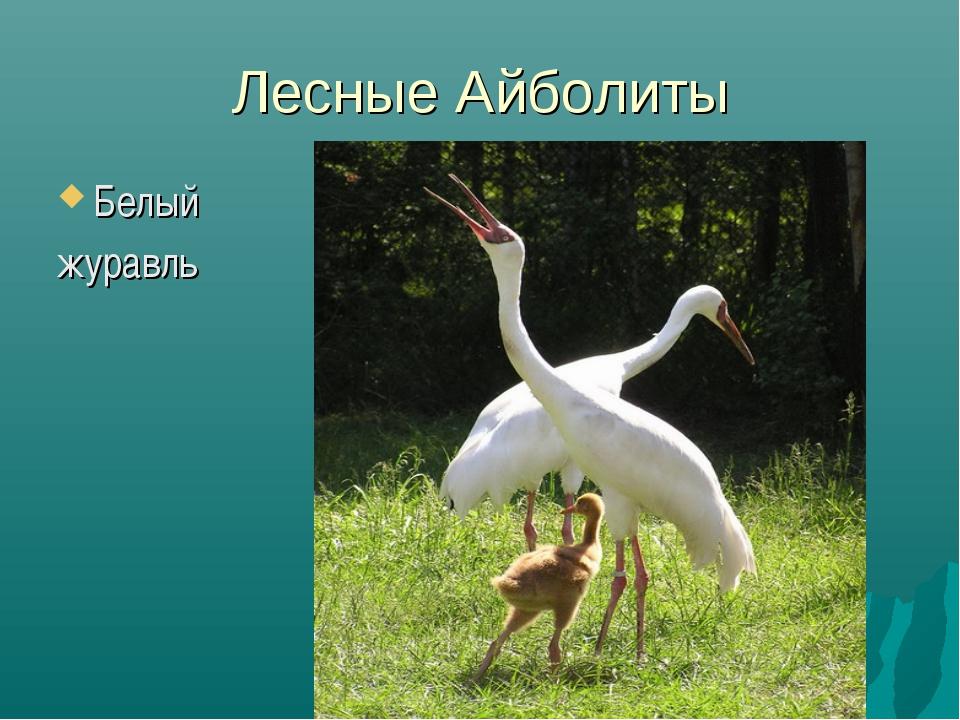 Лесные Айболиты Белый журавль