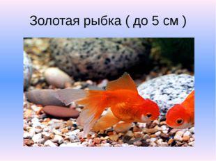 Золотая рыбка ( до 5 см )