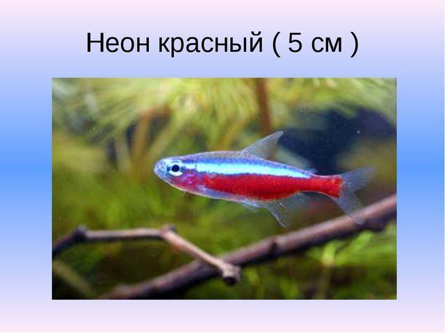 Неон красный ( 5 см )