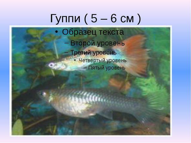 Гуппи ( 5 – 6 см )