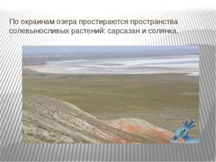 По окраинам озера простираются пространства солевыносливых растений: сарсазан