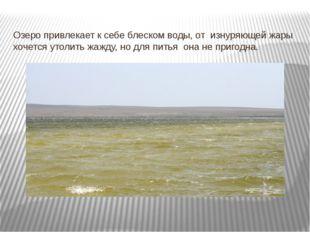 Озеро привлекает к себе блеском воды, от изнуряющей жары хочется утолить жажд