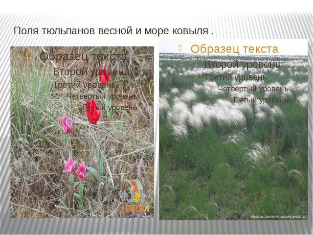 Поля тюльпанов весной и море ковыля .