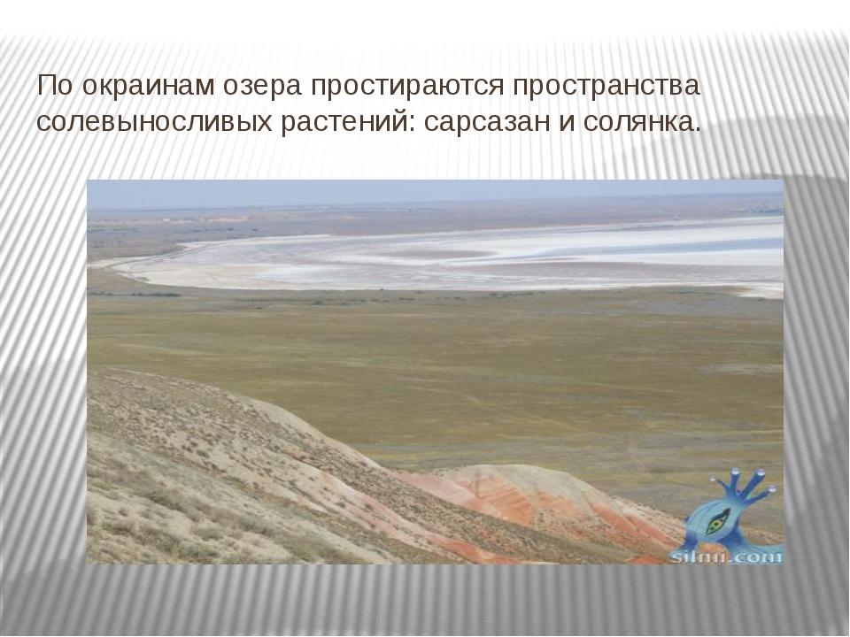 По окраинам озера простираются пространства солевыносливых растений: сарсазан...