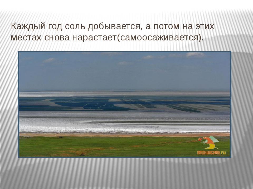 Каждый год соль добывается, а потом на этих местах снова нарастает(самоосажив...