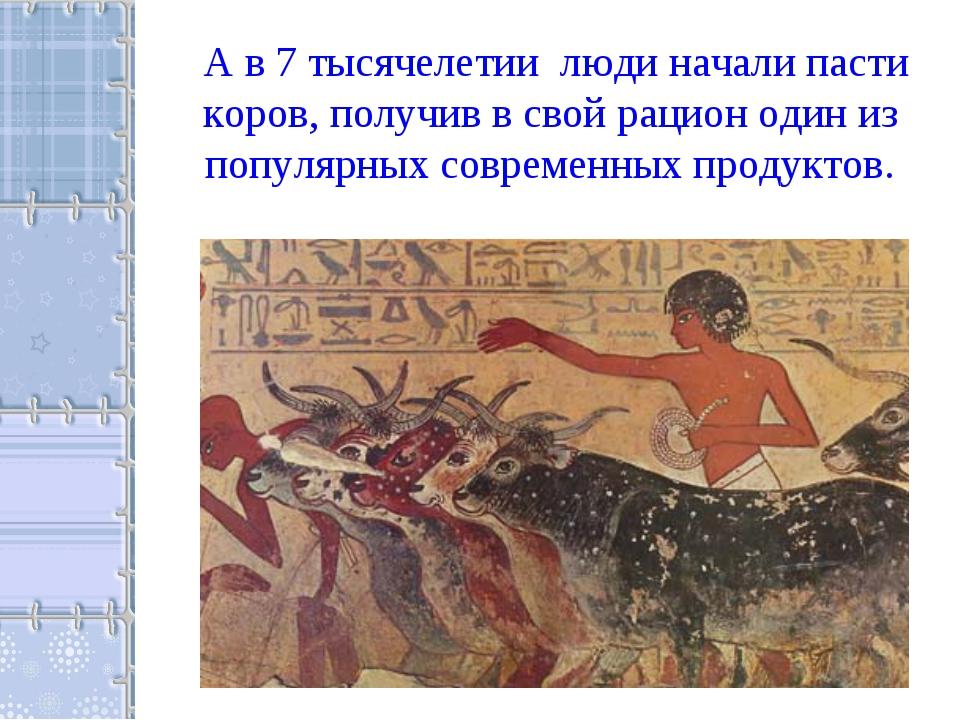 А в 7 тысячелетии люди начали пасти коров, получив в свой рацион один из попу...