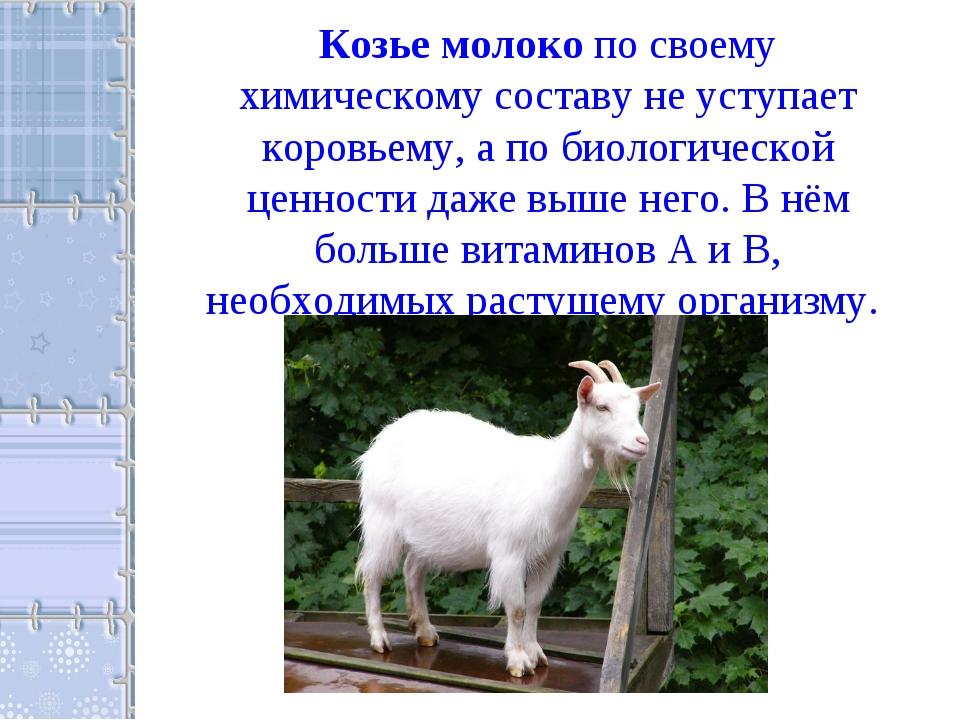 Козье молоко по своему химическому составу не уступает коровьему, а по биолог...