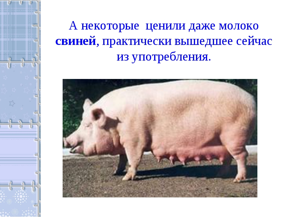 А некоторые ценили даже молоко свиней, практически вышедшее сейчас из употреб...
