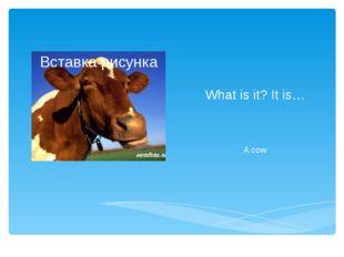 What is it? It is… A cow