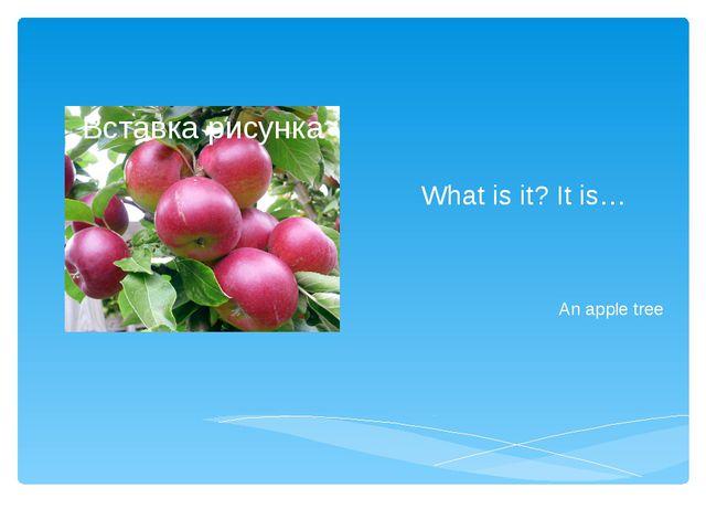 What is it? It is… An apple tree