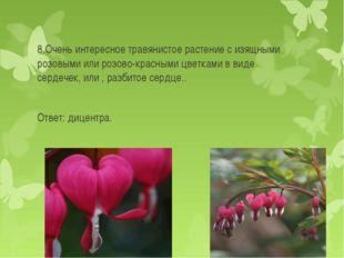 8.Очень интересное травянистое растение с изящными розовыми или розово-красны