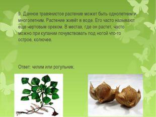 9. Данное травянистое растение может быть однолетним и многолетним. Растение
