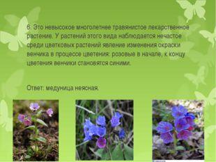 6. Это невысокое многолетнее травянистое лекарственное растение. У растений э