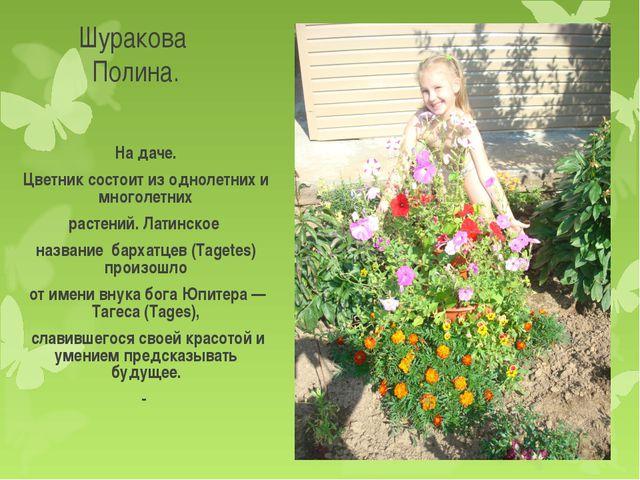 Шуракова Полина. На даче. Цветник состоит из однолетних и многолетних растени...