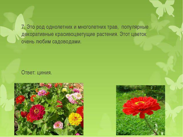 7. Это род однолетних и многолетних трав, популярные декоративные красивоцве...