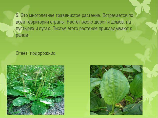 5. Это многолетнее травянистое растение. Встречается по всей территории стран...