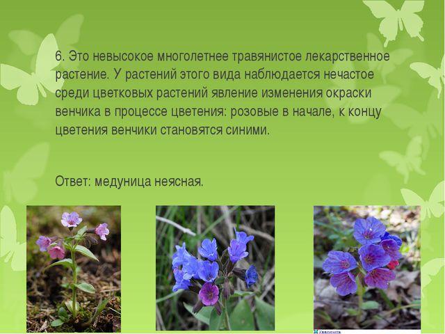 6. Это невысокое многолетнее травянистое лекарственное растение. У растений э...