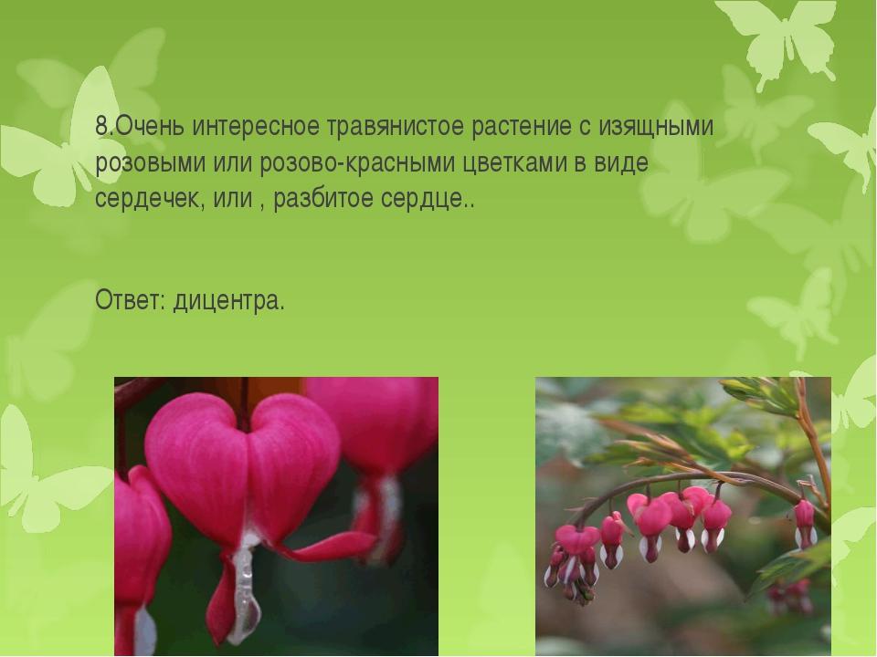 8.Очень интересное травянистое растение с изящными розовыми или розово-красны...