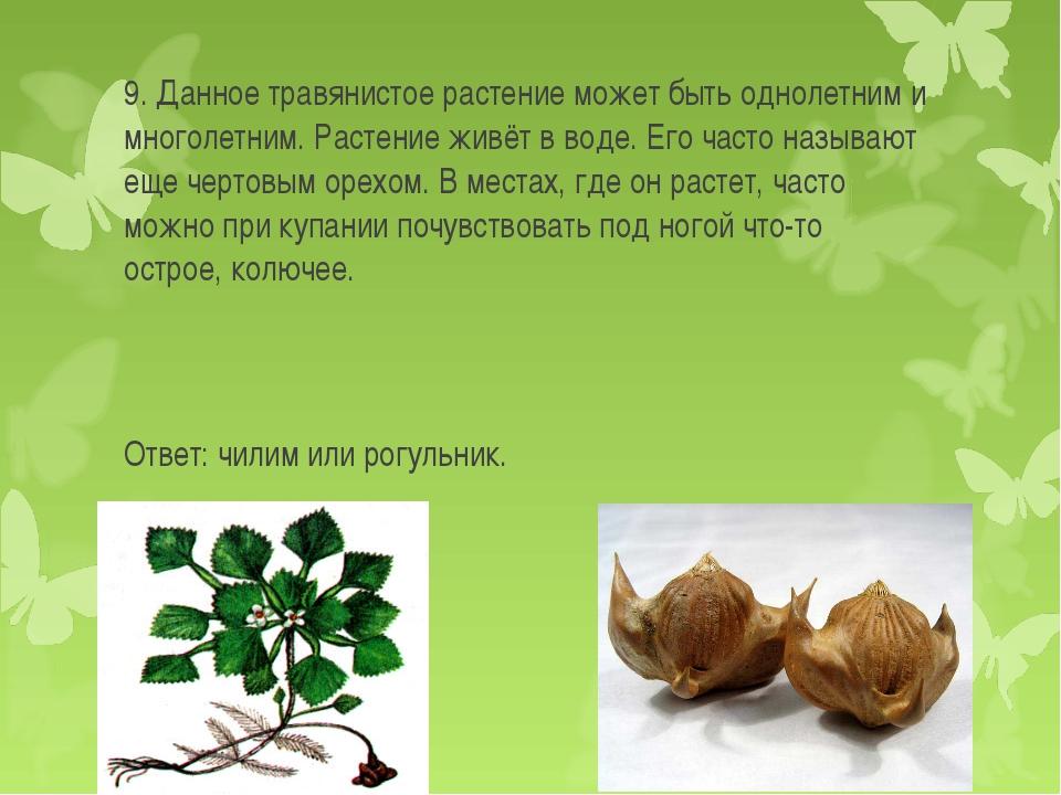 9. Данное травянистое растение может быть однолетним и многолетним. Растение...