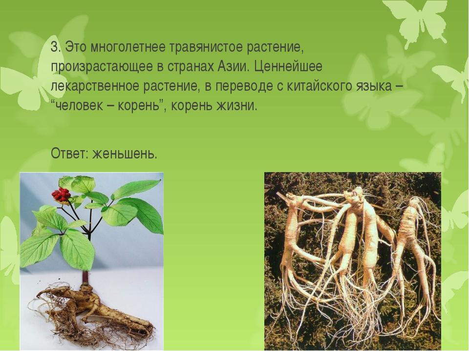 3. Это многолетнее травянистое растение, произрастающее в странах Азии. Ценне...