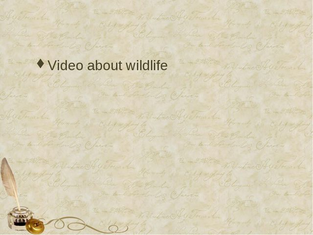 Video about wildlife