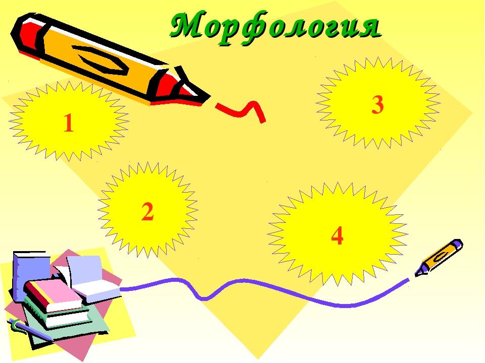 Морфология 1 2 4 3
