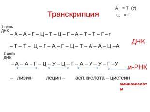 Транскрипция – А – А – Г – Ц – Т – Ц – Г – А – Т – Т – Г – Т 1 цепь ДНК 2 цеп