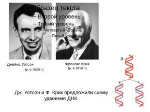 Джеймс Уотсон (р. в 1928 г.) Френсис Крик (р. в 1916 г.) Дж. Уотсон и Ф. Крик