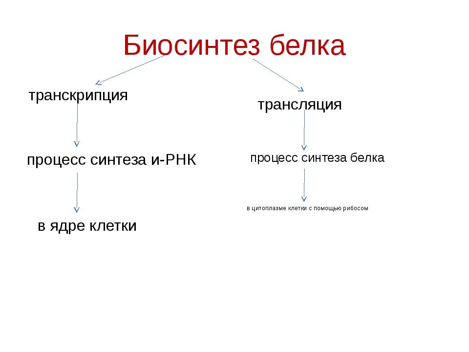 Биосинтез белка транскрипция трансляция процесс синтеза и-РНК процесс синтеза...