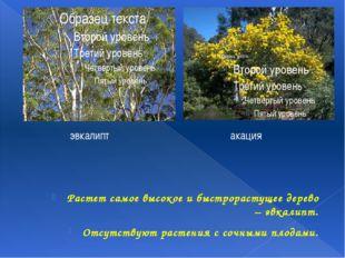 Растет самое высокое и быстрорастущее дерево – эвкалипт. Отсутствуют растения
