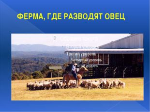 ФЕРМА, ГДЕ РАЗВОДЯТ ОВЕЦ Ферма, на которой разводят овец, в Австралии называю