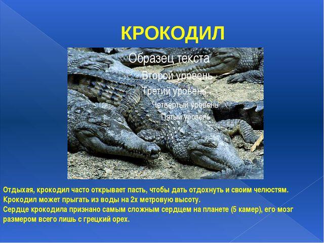 КРОКОДИЛ Отдыхая, крокодил часто открывает пасть, чтобы дать отдохнуть и свои...