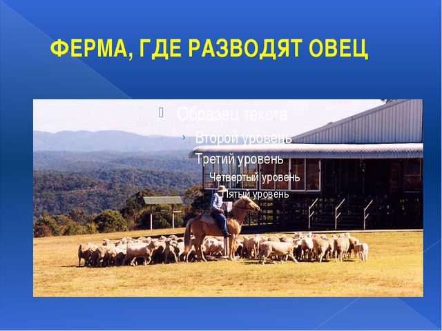 ФЕРМА, ГДЕ РАЗВОДЯТ ОВЕЦ Ферма, на которой разводят овец, в Австралии называю...