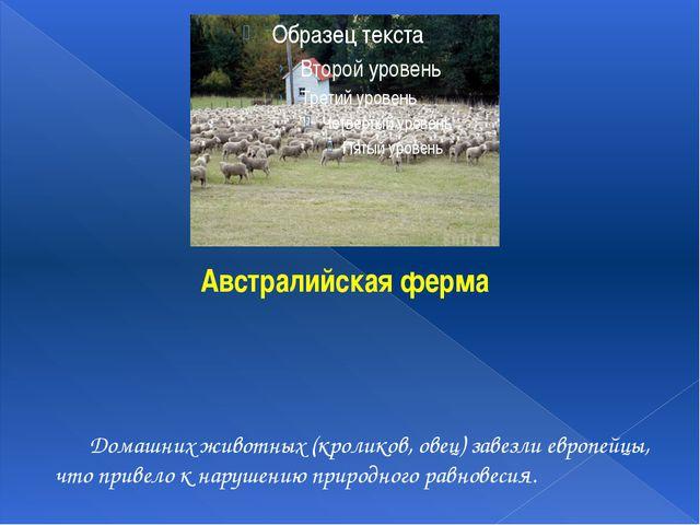 Домашних животных (кроликов, овец) завезли европейцы, что привело к нарушени...