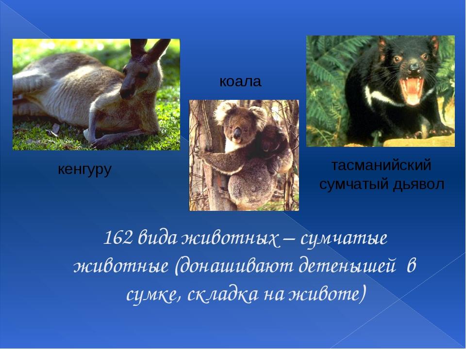 162 вида животных – сумчатые животные (донашивают детенышей в сумке, складка...