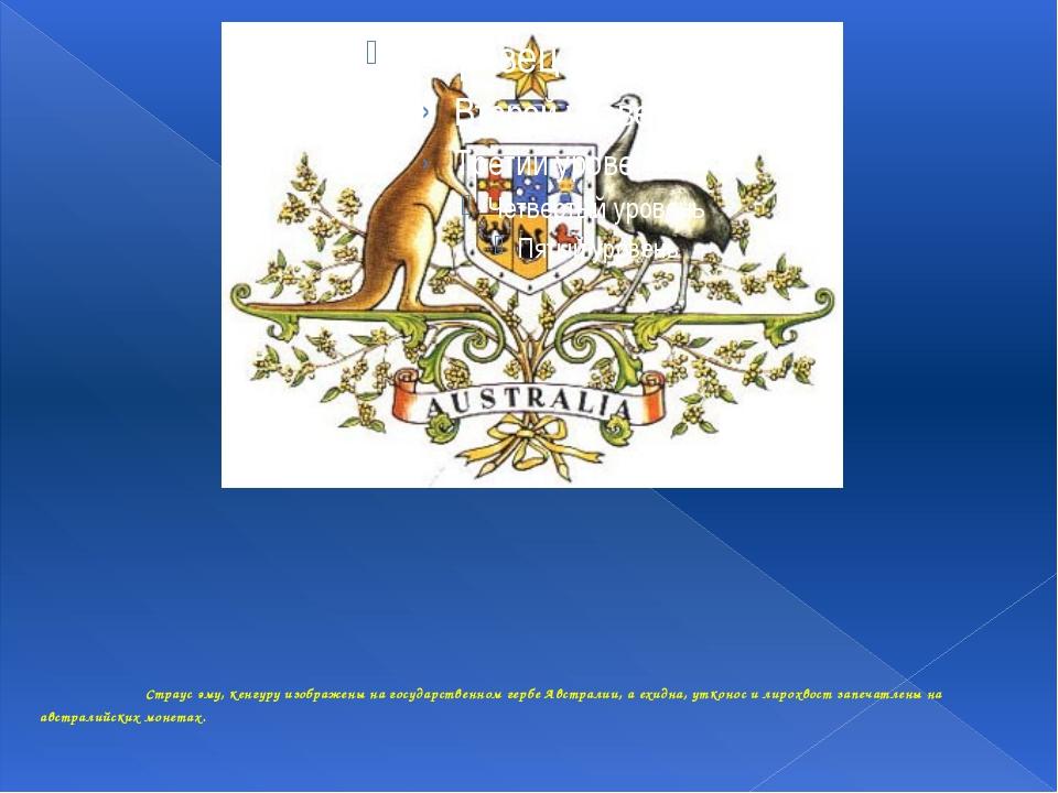 Страус эму, кенгуру изображены на государственном гербе Австралии, а ехидна...