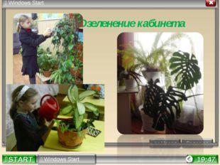 * Озеленение кабинета