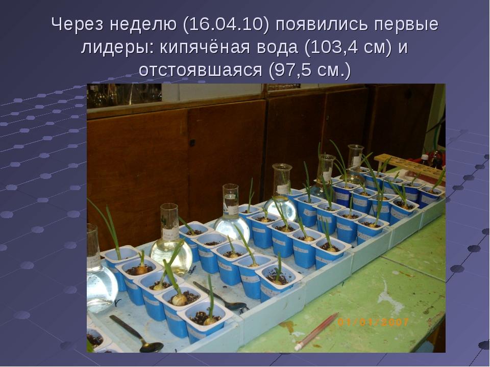 Через неделю (16.04.10) появились первые лидеры: кипячёная вода (103,4 см) и...