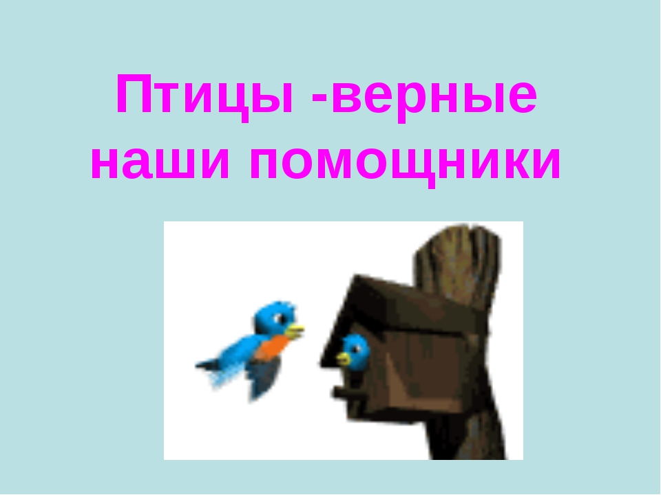 Птицы -верные наши помощники