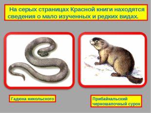На серых страницах Красной книги находятся сведения о мало изученных и редки